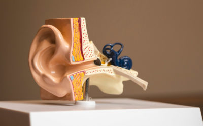 What is the difference between an audiologist and ENT?